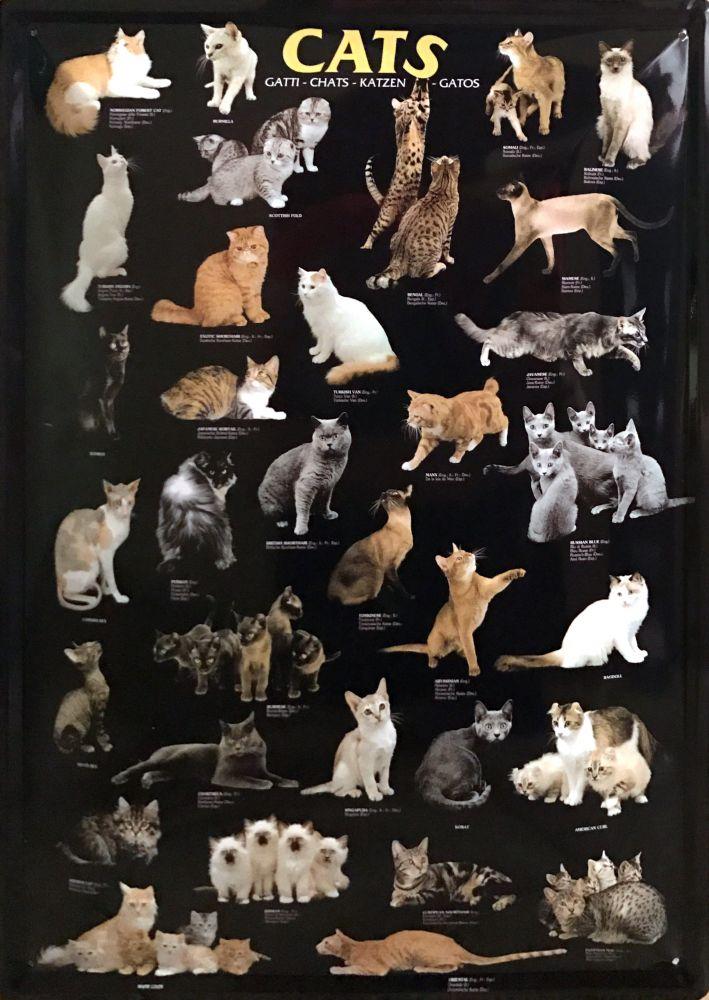 Plechová cedule Cats - Kočky