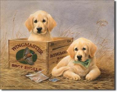 Plechová cedule Wingmaster Labrador štěňata