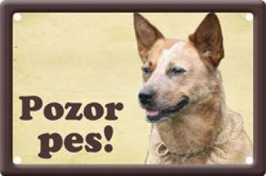 Cedulka Australský honácký pes - Pozor pes