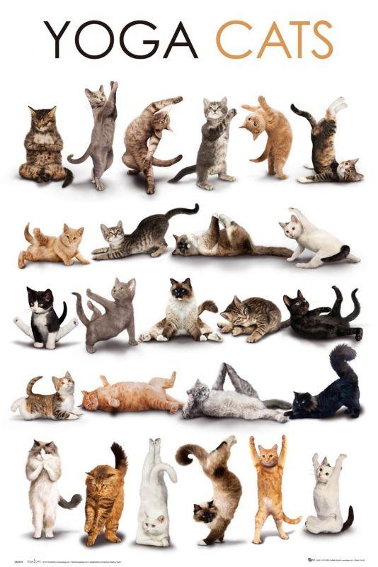 Plechová cedule Yoga cats - kočka