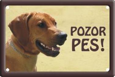 Cedulka Rhodéský ridgeback Pozor pes