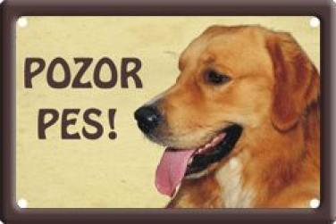 Cedulka Zlatý retrívr Pozor pes