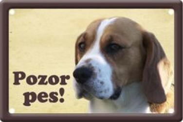 Cedulka Bígl - Beagle Pozor pes poškozeno