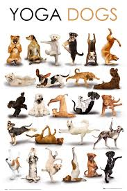 Plechová cedule Yoga dogs - psi
