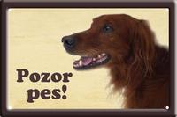 Plechová cedulka Setr - Pozor pes