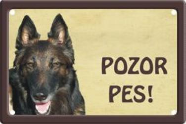 Plechová cedulka na vrata Pozor pes Belgický ovčák
